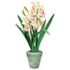 Baumgartens Exotic Flowers