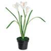 Baumgartens Everyday Flowers