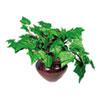 Nu-Dell Artificial Ivy Plant in Mahogany Vase