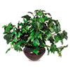 Nu-Dell Artificial Ivy Plant in a Mahogany Fiberglass Pot, 8