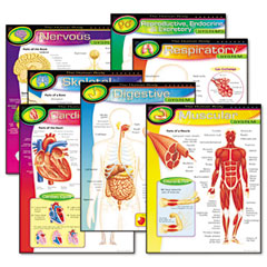 Trend - learning chart combo packs, the human body, 17-inch x 22-inch, 7/pack, sold as 1 pk